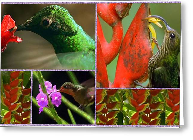 Reiki Mixed Media Greeting Cards - Humming Bird Collection collage  Greeting Card by Navin Joshi