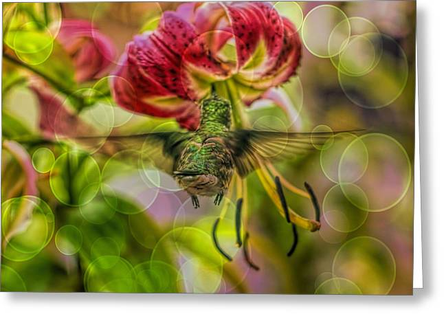 Florescent Lighting Greeting Cards - Hummingbird And Pendant Flower With Overlay  Greeting Card by Geraldine Scull