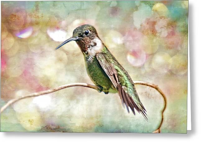 Ruby Throated Hummingbird Art Greeting Cards - Hummingbird Art Greeting Card by Bonnie Barry