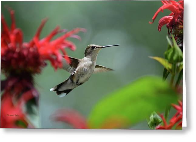 Hummingbird Flying Greeting Card by Christina Rollo