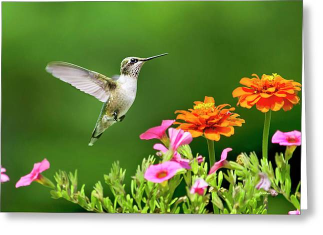 Hummingbird Flying With Flowers Greeting Card by Christina Rollo