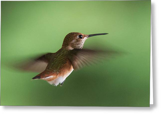 Hovering Greeting Cards - Hummingbird Hovering Greeting Card by Angie Vogel