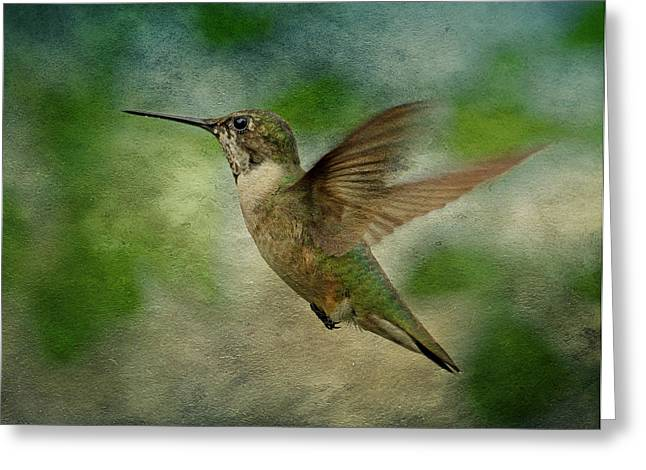 Trochilidae Greeting Cards - Hummingbird in Flight II Greeting Card by Sandy Keeton