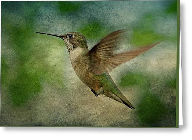 Ruby Throated Hummingbird Art Greeting Cards - Hummingbird in Flight II Greeting Card by Sandy Keeton