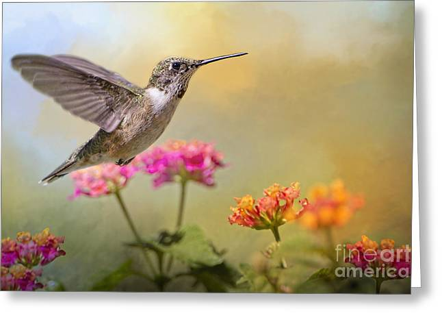 Garden Scene Greeting Cards - Hummingbird in the Garden Greeting Card by Bonnie Barry