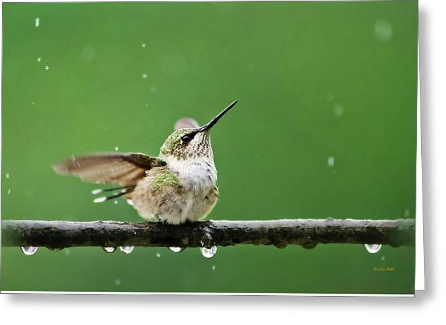 Hummingbird In The Rain Greeting Card by Christina Rollo
