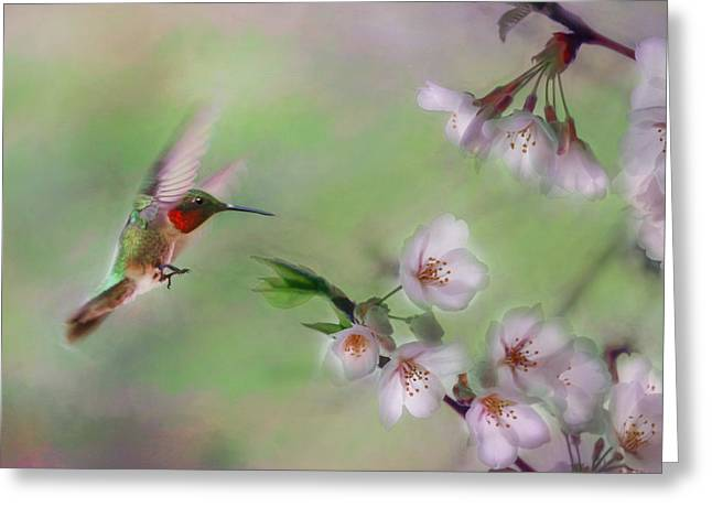 Weeping Mixed Media Greeting Cards - Hummingbird Greeting Card by Lori Deiter
