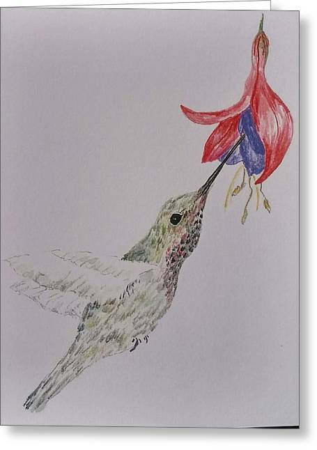 Hummingbird On Fushia Greeting Card by Sally Atchinson