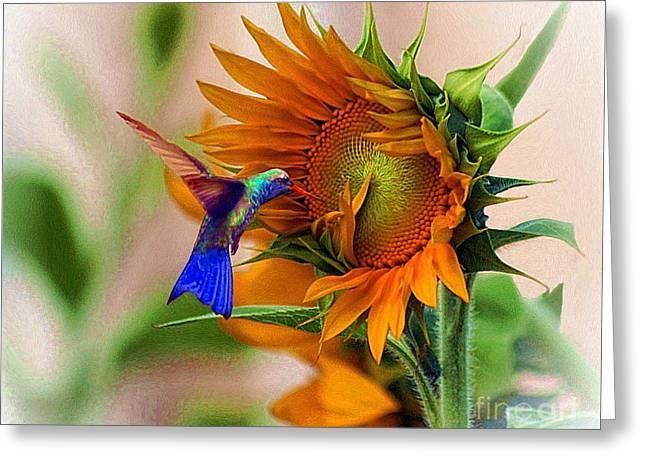 John Kolenberg Greeting Cards - Hummingbird On Sunflower Greeting Card by John  Kolenberg