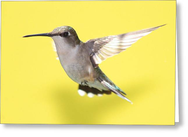 Bird In Flight Greeting Cards - Hummingbird on Yellow 1 Greeting Card by Robert  Suits Jr
