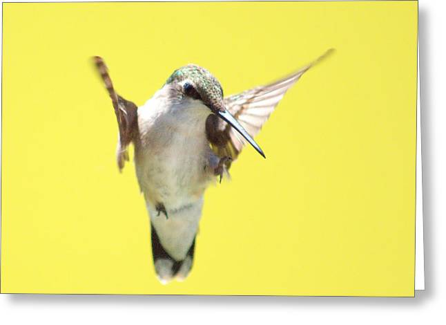 Bird In Flight Greeting Cards - Hummingbird on Yellow 2 Greeting Card by Robert  Suits Jr