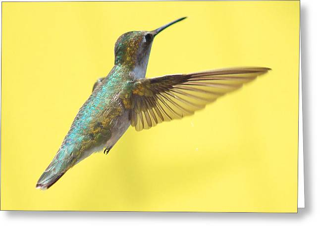 Bird In Flight Greeting Cards - Hummingbird on Yellow 3 Greeting Card by Robert  Suits Jr