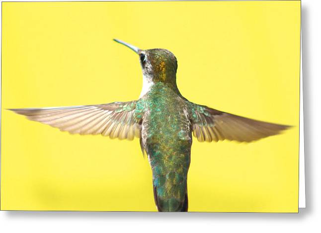 Bird In Flight Greeting Cards - Hummingbird on Yellow 4 Greeting Card by Robert  Suits Jr