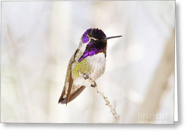 Hummingbird Greeting Card by Rebecca Margraf