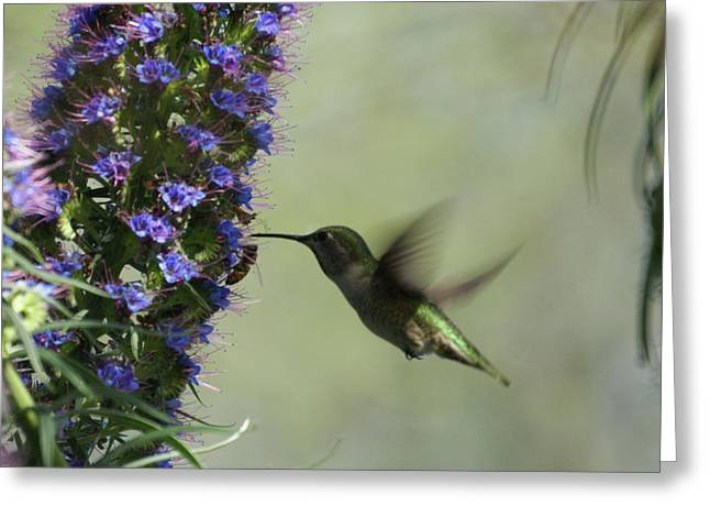 Hummingbird Sharing Greeting Card by Ernie Echols