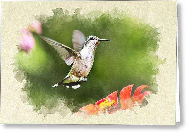 Hovering Mixed Media Greeting Cards - Hummingbird Shimmering Breeze Blank Note Card Greeting Card by Christina Rollo