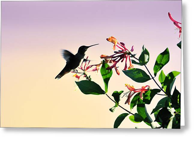 Hovering Greeting Cards - Hummingbird Sunset Greeting Card by Betty LaRue