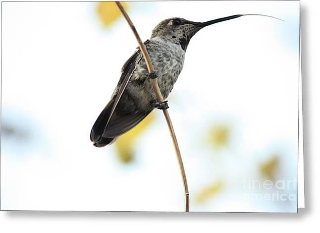 Hummingbird Tongue Greeting Card by Carol Groenen