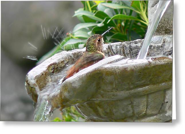 Hummingbirds Do Take Baths Greeting Card by Jennie Marie Schell