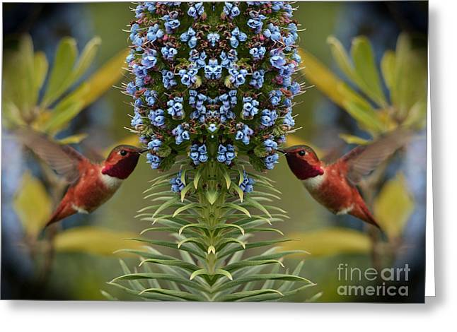 Flying Animal Greeting Cards - Hummingbirds Feeding on Echium Flowers Greeting Card by Jim Fitzpatrick