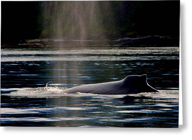Pictures Of Sea Life Greeting Cards - Humpback in the Mist Greeting Card by Stacie Gary