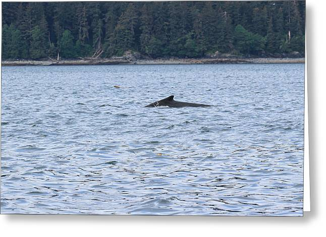 Sea Lions Greeting Cards - Humpback Whale and Steller Sea Lion Greeting Card by Allan Levin