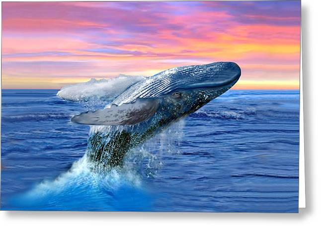 Humpback Whale Breaching At Sunset Greeting Card by Glenn Holbrook