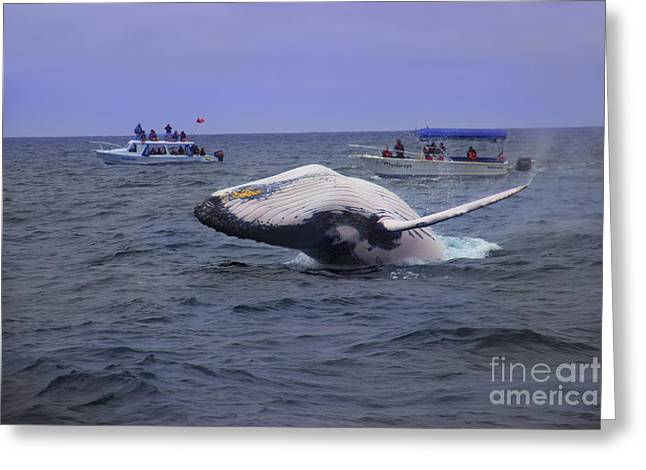 Huge Eyes Greeting Cards - Humpback Whale Breaching Near Puerto Lopez - Ecuador VI Greeting Card by Al Bourassa