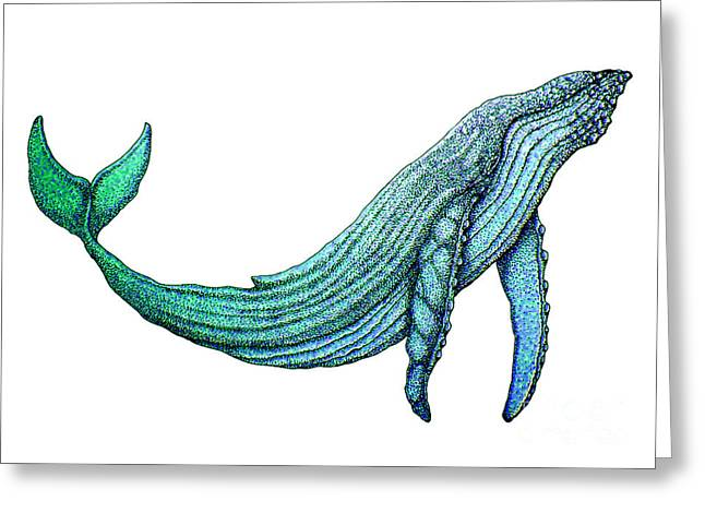 Whale Drawings Greeting Cards - Humpback Whale Greeting Card by Nick Gustafson