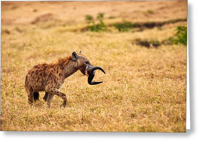 Continent Greeting Cards - Hungry Hyena Greeting Card by Adam Romanowicz