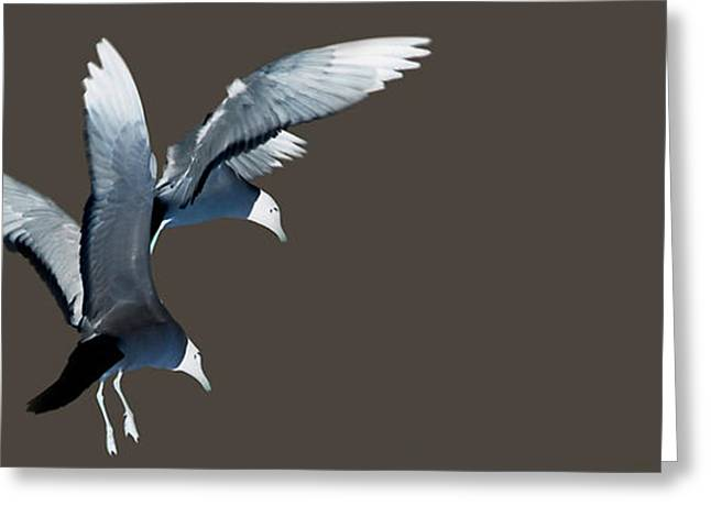 Flying Seagull Greeting Cards - Hungry Seagulls Greeting Card by JoAnn Lense