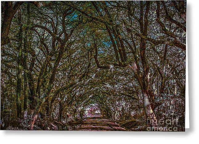 South Carolina Infrared Landscape Greeting Cards - Hunting Island path Greeting Card by Izet Kapetanovic