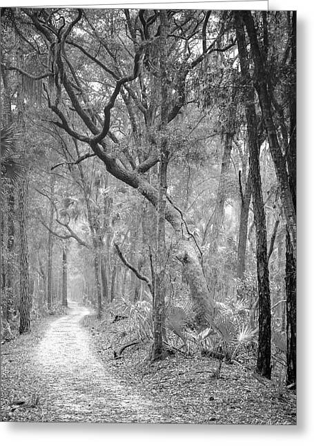 Outdoor Photography Digital Greeting Cards - Hunting Island Path  Greeting Card by Phill  Doherty