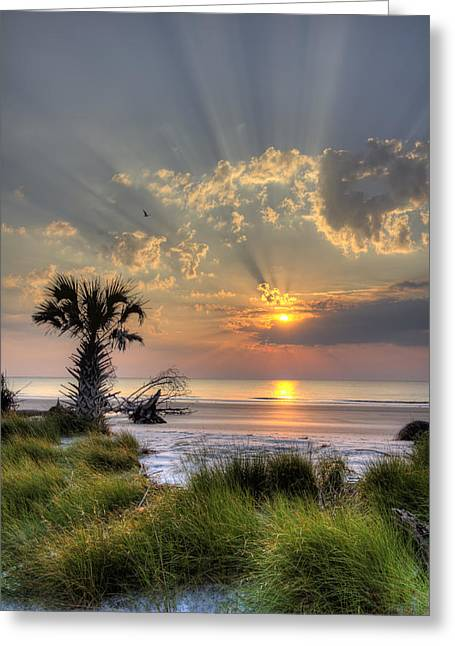 Sun Ray Greeting Cards - Hunting Island SC Sunrise Palm Greeting Card by Dustin K Ryan