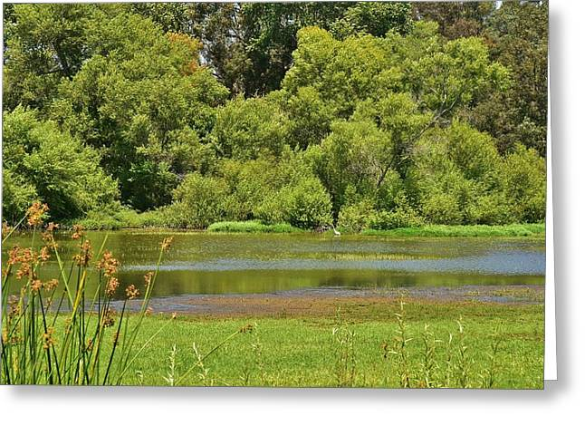 Pond In Park Greeting Cards - Huntington Beach Central Park II Greeting Card by Linda Brody