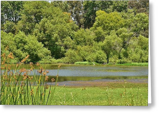 Pond In Park Greeting Cards - Huntington Beach Central Park III Greeting Card by Linda Brody