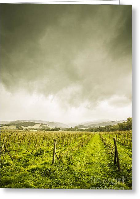 Huon Valley Apple Farm In Winter Greeting Card by Jorgo Photography - Wall Art Gallery