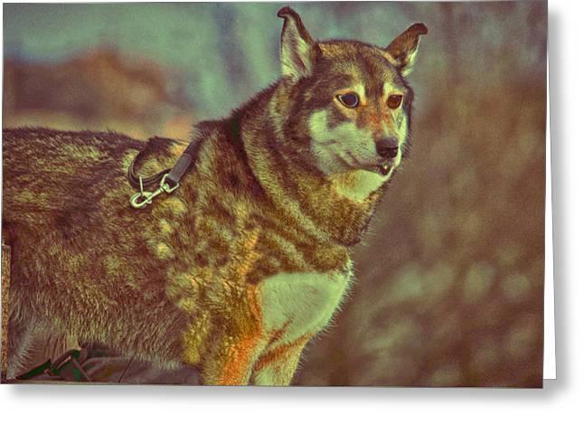 Dogs Digital Greeting Cards - Husky Dog Greeting Card by KJ DePace