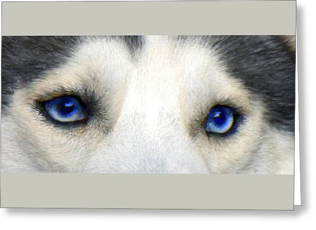 Huskies Greeting Cards - Husky Eyes Greeting Card by Jane Schnetlage
