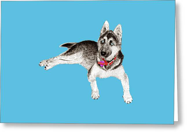 Huskies Drawings Greeting Cards - Husky Puppy Bella Greeting Card by Jack Pumphrey