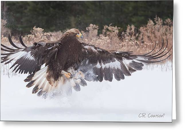 Hunting In The Snow Greeting Card by CR Courson