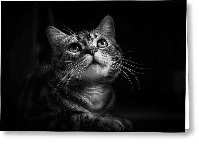 Portrait Greeting Cards - Huzi The Cat Greeting Card by Loody