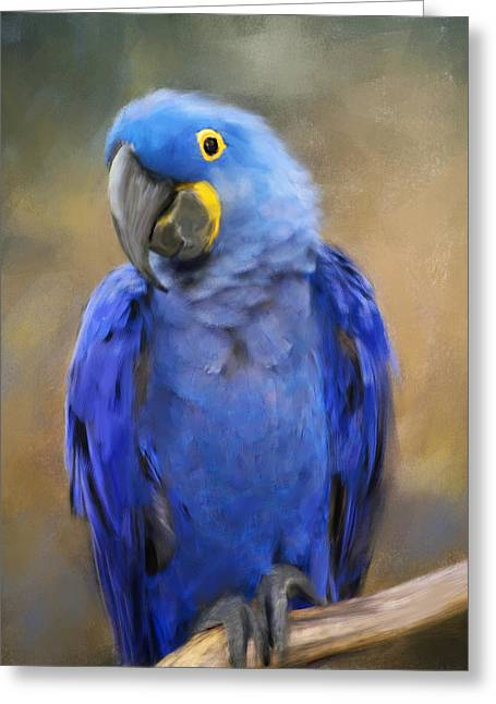 Blue Macaws Greeting Cards - Hyacinth Macaw  Greeting Card by Jai Johnson