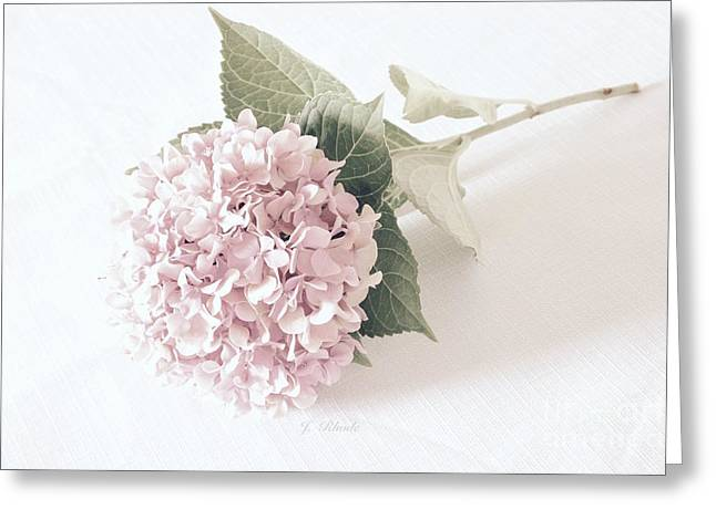 Flower Still Life Prints Greeting Cards - Hydrangea in Soft Pink Greeting Card by Jeannie Rhode Photography