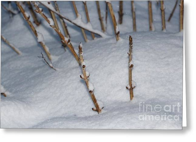 Wintry Greeting Cards - Hydrangea in the Winter Greeting Card by Jari Hawk