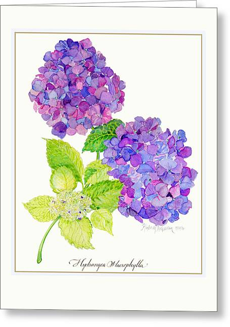 Fresh Green Drawings Greeting Cards - Hydrangea Greeting Card by Kimberly McSparran