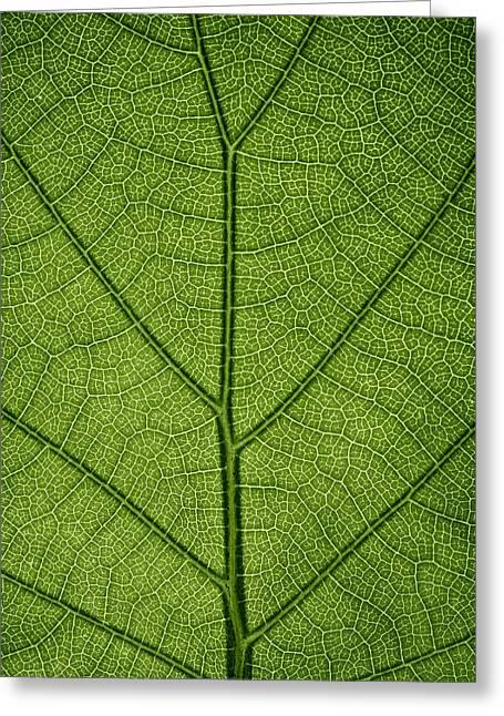 Hydrangea Leaf Greeting Card by Steve Gadomski