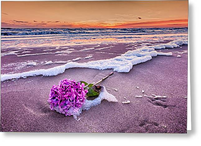 Menu Greeting Cards - Hydrangea Washed Up On The Beach part 2 Greeting Card by Alex Hiemstra