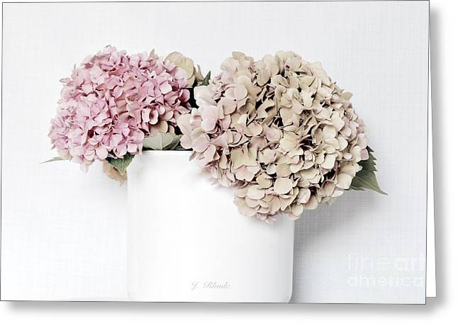 Flower Still Life Prints Greeting Cards - Hydrangeas in Softness Greeting Card by Jeannie Rhode Photography