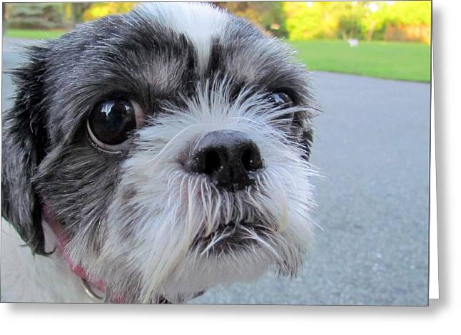 Puppies Photographs Greeting Cards - I Am NOT Amused Greeting Card by Lori Pessin Lafargue